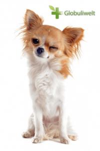 Homöopathie Hunde