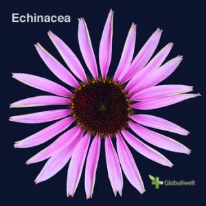 Echinacea-homoeopathie