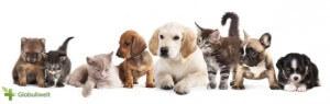 Homöopathie Tiere