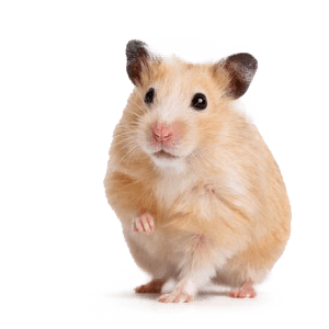 Globuli-Maus