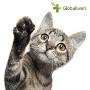 Homöopathie Katzen