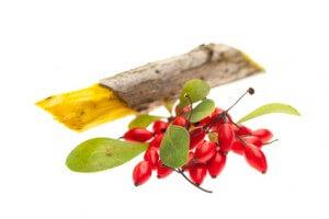Berberitze (Berberis vulgaris)  Beeren, Blätter und Holz
