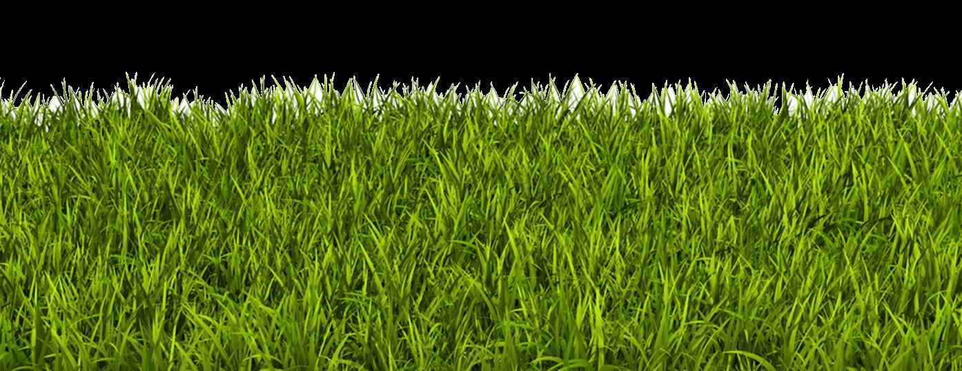 Globuliwelt-Gras