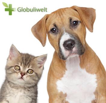 Globuli für Hunde und Katzen