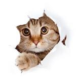 Warum Homöopathie ohne Tierversuche auskommt