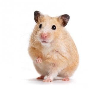 Was können wir unseren Kleintieren Gutes tun – Gesundheitstipps für die Kleinsten