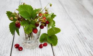 Fragaria Vesca (Erdbeere)