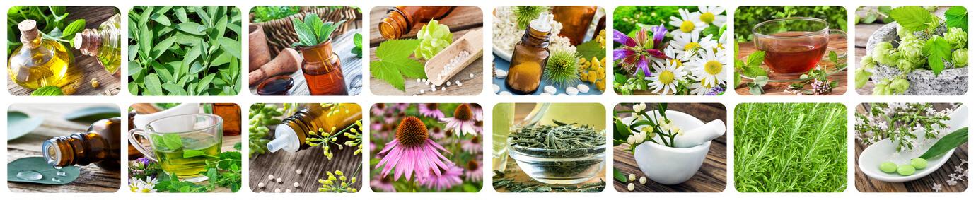 Healing herbs - medicine